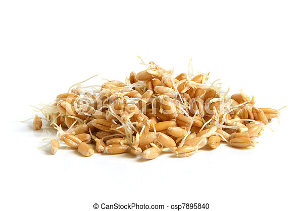 Wheat germs - csp7895840
