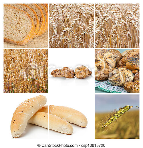 Wheat. Harvest concepts. Cereal collage - csp10815720