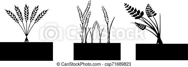wheat icon on white background - csp71689823