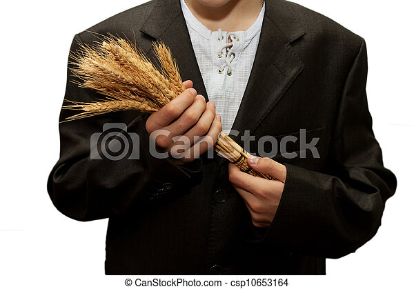 wheat in the hands of men on a white background - csp10653164