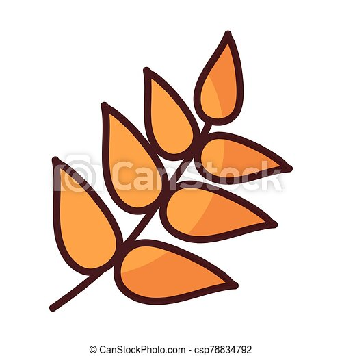 wheat leaves on white background - csp78834792