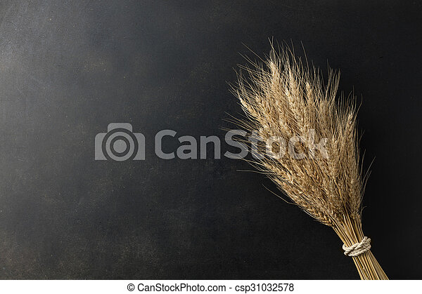 wheat on black background - csp31032578