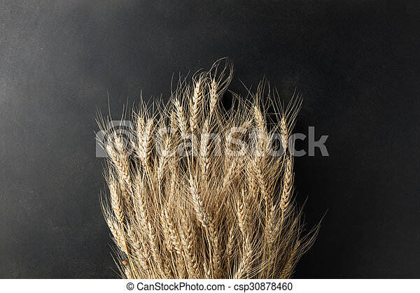 wheat on black background - csp30878460