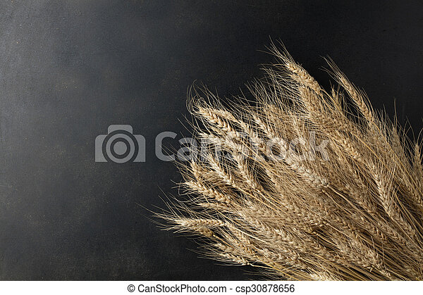 wheat on black background - csp30878656