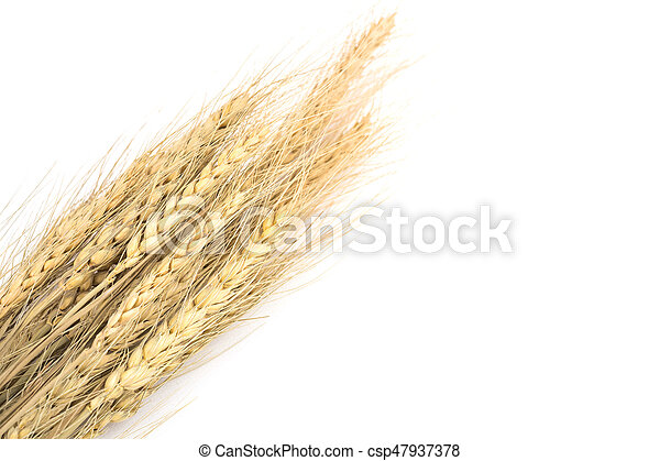Wheat on white background - csp47937378
