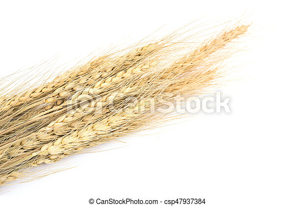 Wheat on white background - csp47937384