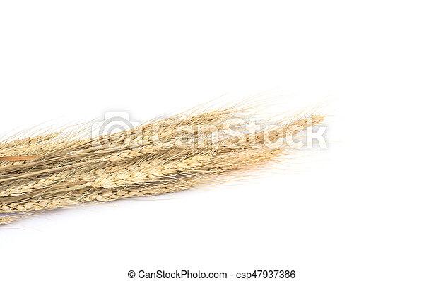 Wheat on white background - csp47937386