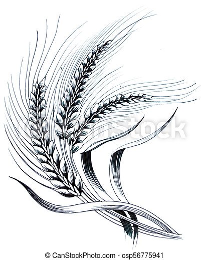 Wheat Plant Ink Black And White Drawing Of A Wheat Plant