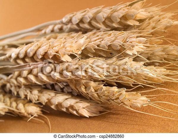 Wheat - csp24882860