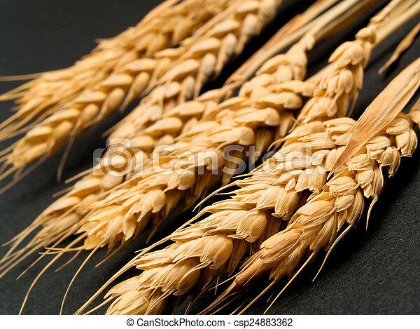 Wheat - csp24883362