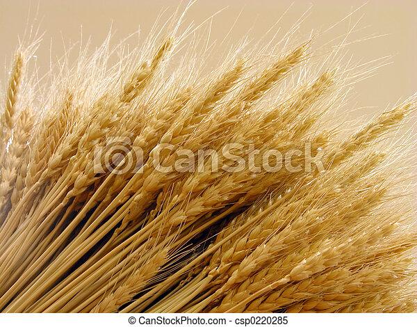 Wheat - csp0220285
