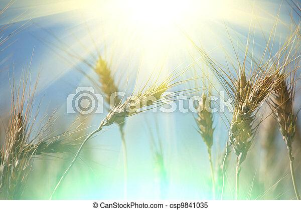 Wheat - csp9841035