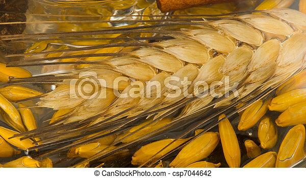 Wheat - csp7044642