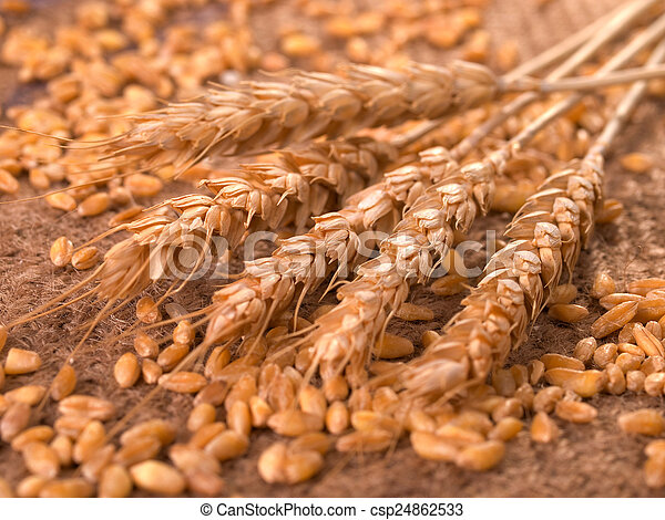 Wheat - csp24862533