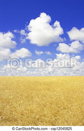 Wheaten field in a sunny day - csp12045825