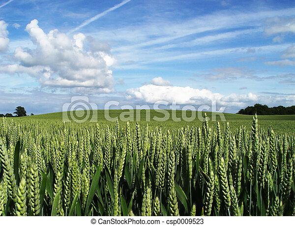wheatfield - csp0009523