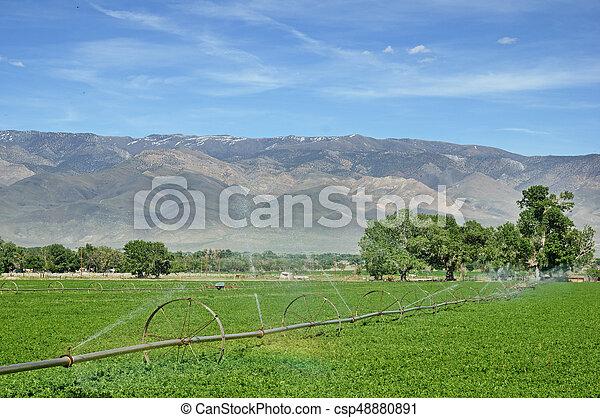 Wheel Line Irrigation - csp48880891