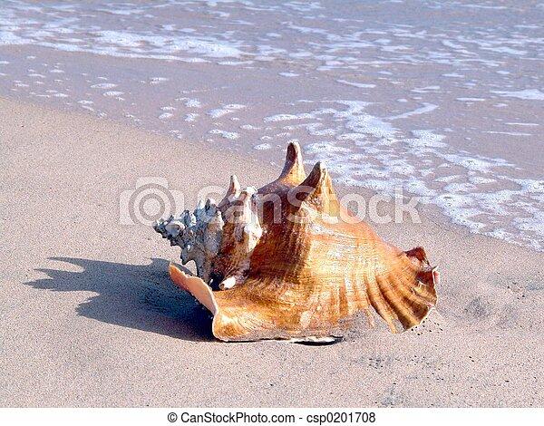 whelk in the beach - csp0201708