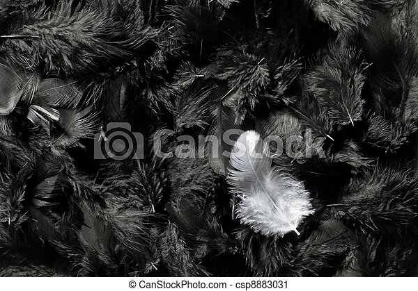 white and black feathers - csp8883031