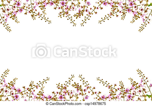 White and pink of Cananga flower. - csp14978675
