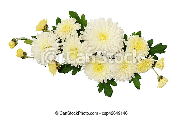 White aster flowers arrangement isolated on white white aster flowers arrangement csp42649146 mightylinksfo