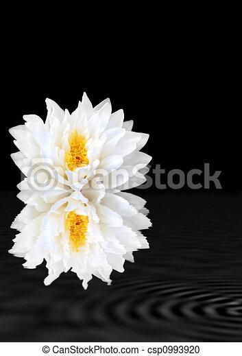 White Beauty - csp0993920