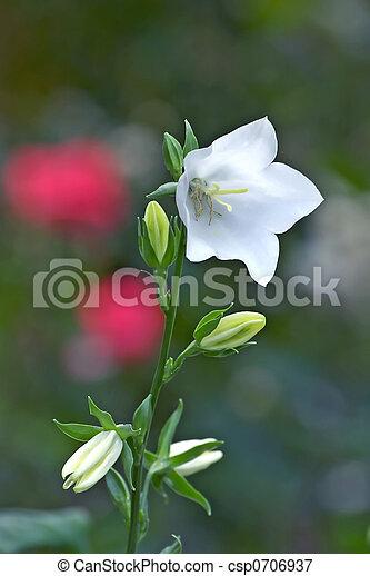 White bell flower white bell flower csp0706937 mightylinksfo