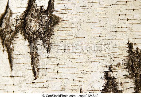 White birch bark texture - csp40124642