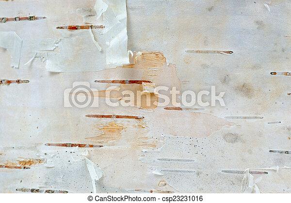 White Birch Tree Bark Texture Macro - csp23231016