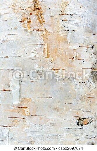 White Birch Tree Bark Texture - csp22697674