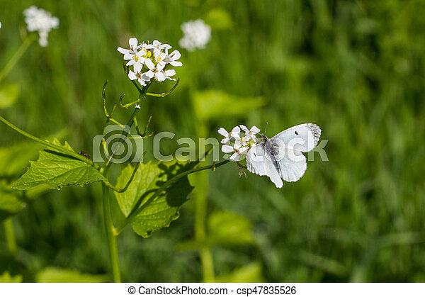 White butterfly on an little white flower against green background white butterfly on an little white flower csp47835526 mightylinksfo