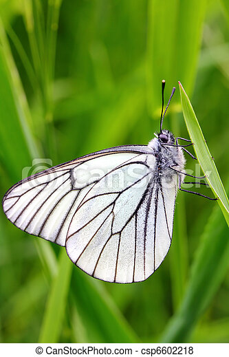 white butterfly on green grass - csp6602218