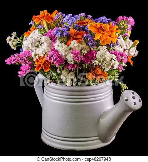 White ceramic watercan sprinkler with vivid colored flowers white ceramic watercan sprinkler with vivid colored flowers orange tagetes purple wild flowers close up isolated black background mightylinksfo
