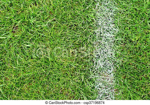White Chalk Line on Green Grass - csp37196874