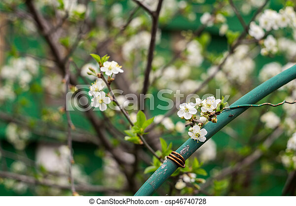 White cherry blooming trees white flowers blooming on stock white cherry blooming trees csp46740728 mightylinksfo Gallery