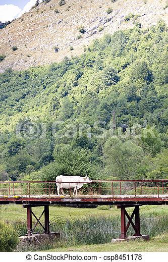 White cow on the bridge - csp8451178