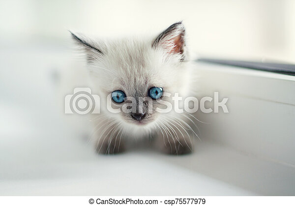White Cute Cat With Blue Eye Stand Alone And Beautiful Background