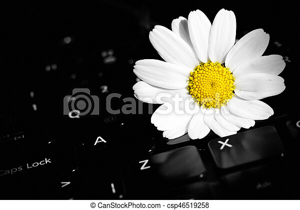 White Daisy Flower on Laptop - csp46519258