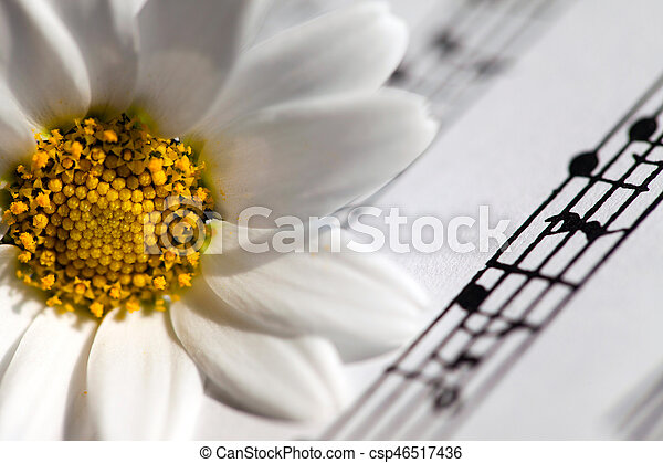 White Daisy Flower on Music Notes - csp46517436