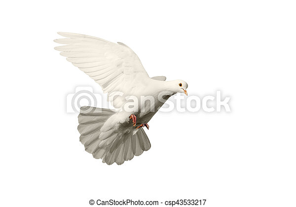 White Dove Flying Symbol Of Love Isolated On Background White Dove