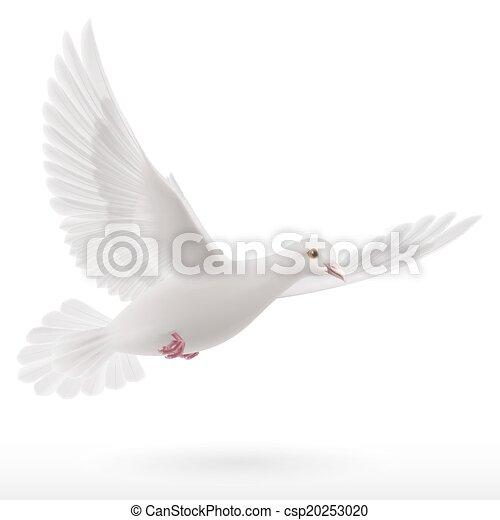 White dove - csp20253020