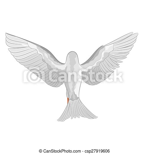 White dove pigeon vector.eps - csp27919606