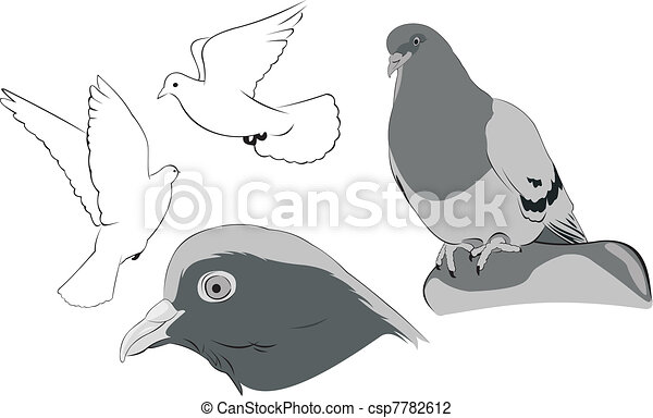 white doves sketches vector