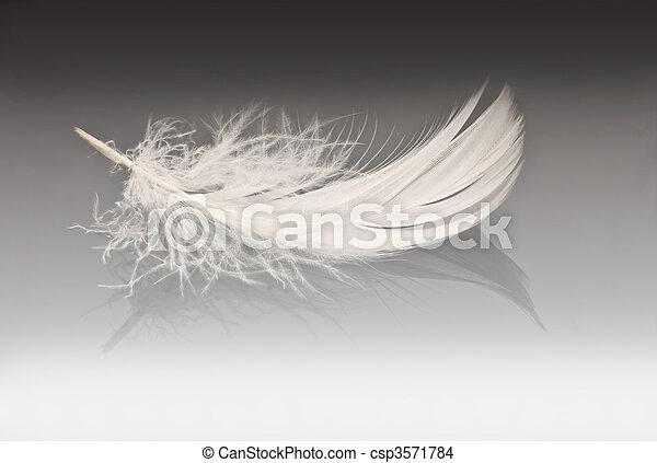 white feather on grey - csp3571784