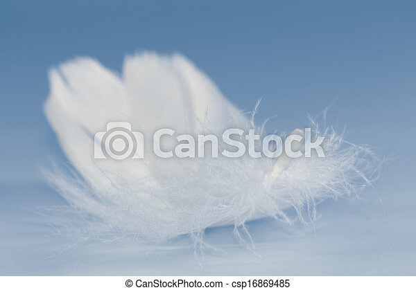 White Feather - csp16869485