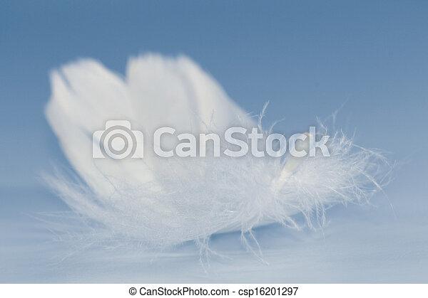 White Feather - csp16201297