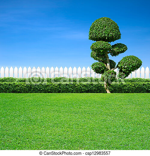 white fence and ornamental tree - csp12983557