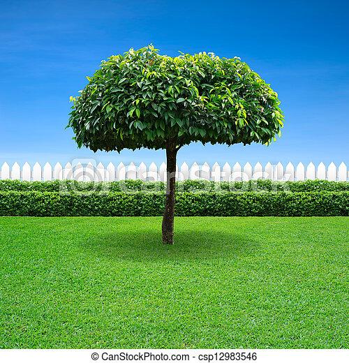 white fence and umbrella tree - csp12983546