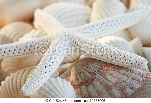 White finger starfish and seashells - csp10657006