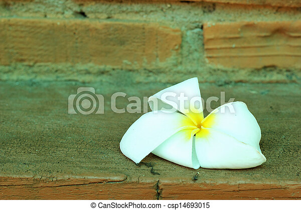White flower against a brick wall. - csp14693015